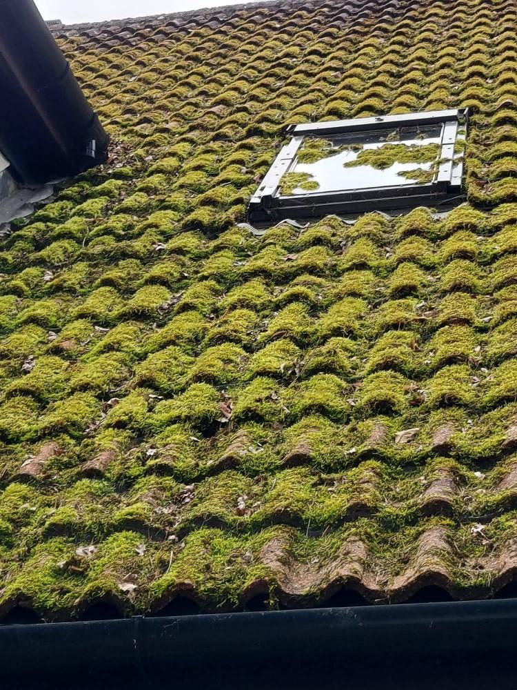 Roof full of moss